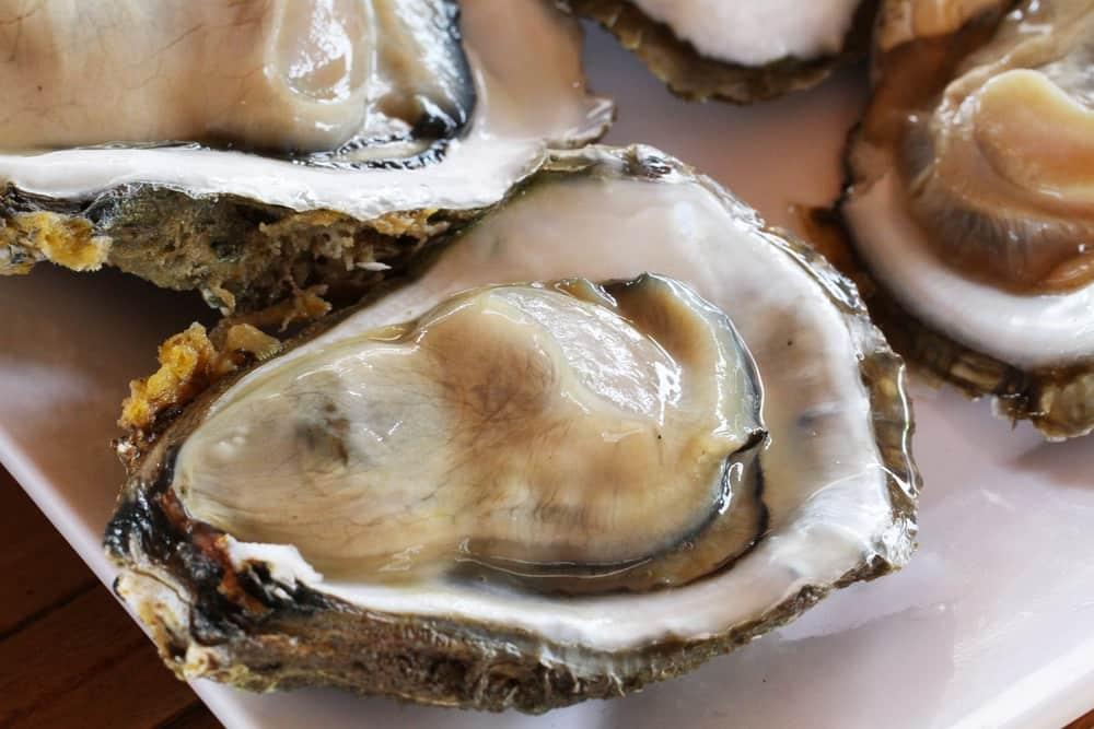 牡蠣小屋 かき 小屋 牡蠣 糸島 福岡 カキ 福岡牡蠣小屋 海鮮 船越 焼き牡蠣 オイスター 36