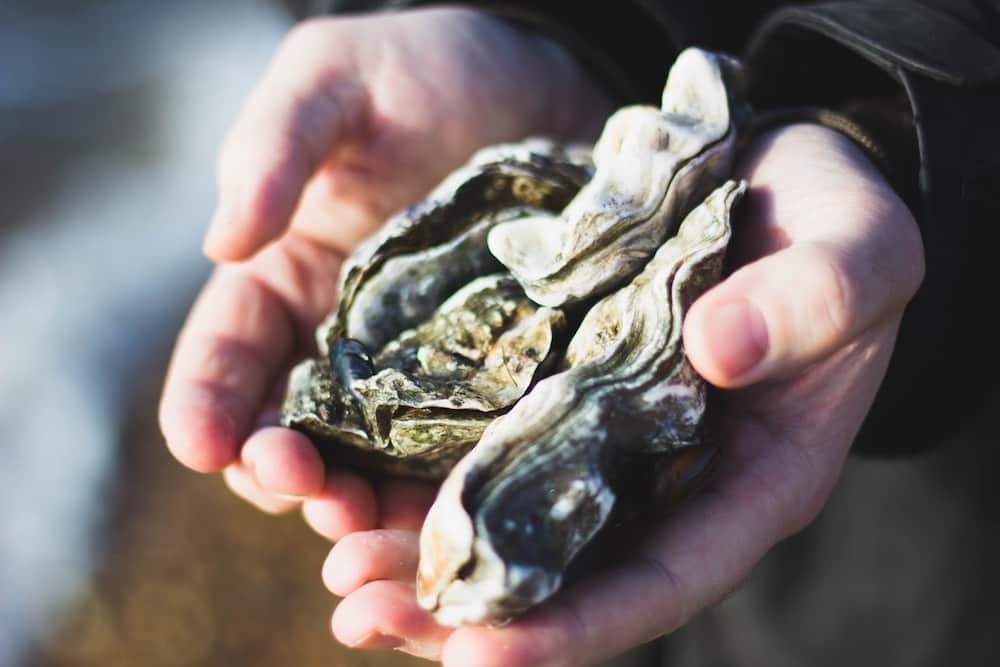 牡蠣小屋 かき 小屋 牡蠣 糸島 福岡 カキ 福岡牡蠣小屋 海鮮 船越 焼き牡蠣 オイスター 54