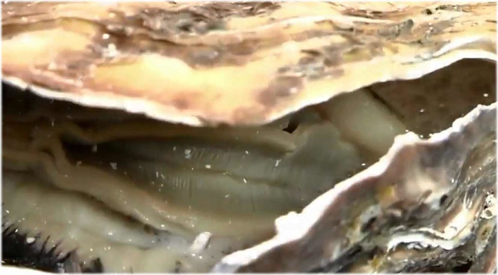 活牡蠣 糸島 船越 福岡 服部屋 人気 美味しい 牡蠣小屋 22