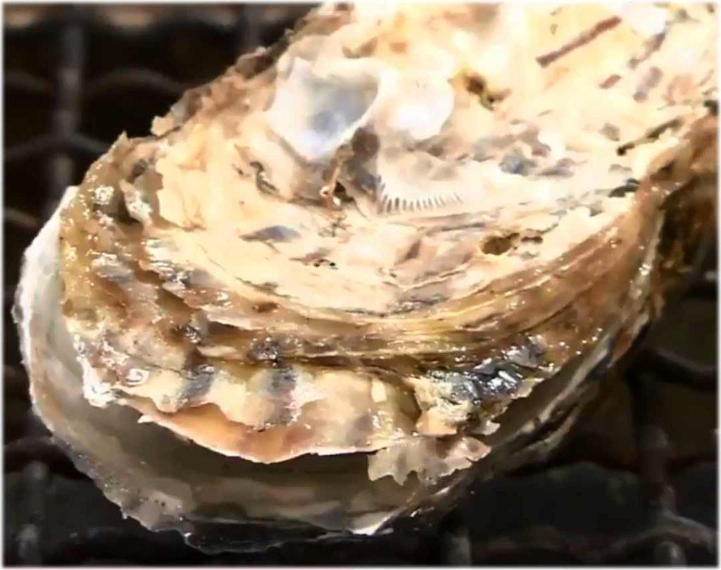 活牡蠣 糸島 船越 福岡 服部屋 人気 美味しい 牡蠣小屋 4